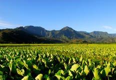 域夏威夷考艾岛芋头 免版税库存照片