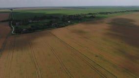 域成熟麦子 在视图之上 免版税库存照片