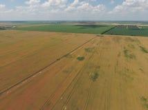 域成熟麦子 在视图之上 库存图片