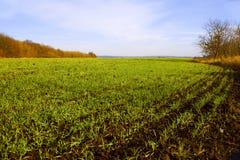 域我被播种的麦子冬天 库存图片