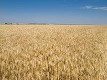 域收获麦子 免版税库存图片