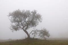 域查出的橄榄树 免版税库存照片