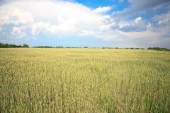 域横向麦子 免版税库存照片