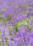 域淡紫色 库存照片