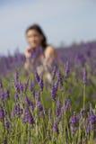 域淡紫色普罗旺斯 库存照片