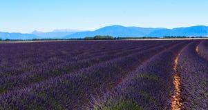域淡紫色普罗旺斯 库存图片