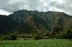 域玉米秘鲁人 免版税库存图片