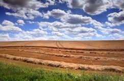 域用被砍成的玉米和云彩 免版税库存图片