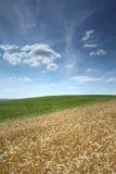 域用被砍成的玉米和云彩 免版税图库摄影