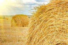 域的干草堆 免版税库存照片
