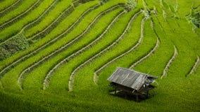 域米越南 库存照片