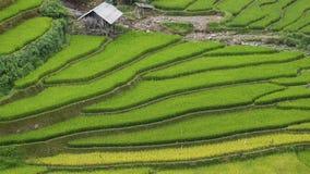 域米越南 图库摄影
