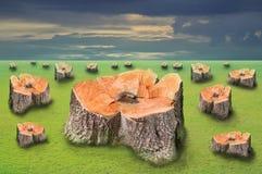 域绿色树桩结构树 库存图片