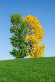 域绿色结构树黄色 库存照片