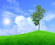 域绿色结构树 图库摄影