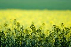 域绿色黄色 免版税库存照片