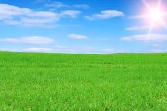 域绿色 免版税库存图片