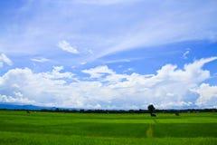 域草理想的天空 库存照片