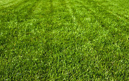 域草绿色 免版税库存图片