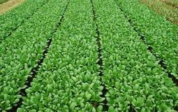 域蔬菜 免版税图库摄影