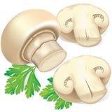 域蘑菇荷兰芹 库存照片