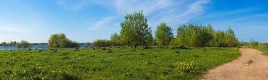 域被充斥的春天视图 免版税库存图片