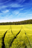 域跟踪拖拉机麦子 免版税图库摄影