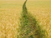 域路径麦子 库存照片