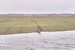 域重点前景草横向大取向 湖 灰色颜色 多云天气 免版税库存照片