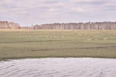 域重点前景草横向大取向 灰色颜色 湖 多云天气 免版税库存照片