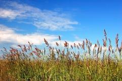 域,草。 库存图片