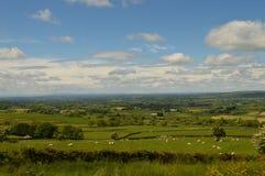 域绿色爱尔兰 库存照片