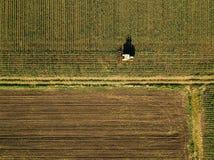 培养玉米庄稼领域,鸟瞰图的拖拉机 库存图片