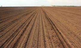 培养的土壤 库存照片