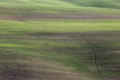培养的领域在有美好的绿色和b的托斯卡纳意大利, 库存图片