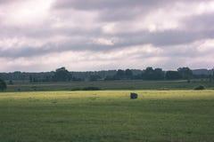 培养的麦田在夏天-葡萄酒减速火箭的神色 免版税库存图片
