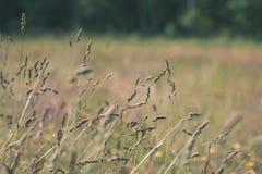 培养的麦田在夏天-葡萄酒减速火箭的神色 免版税图库摄影
