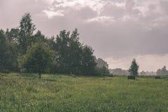 培养的麦田在夏天-葡萄酒减速火箭的神色 免版税库存照片
