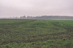 培养的麦田在夏天-葡萄酒减速火箭的神色 库存图片