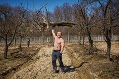 培养一棵树的强有力的人在果树园 库存图片