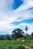 培养的区域风景反对蓝天的和多云 免版税图库摄影