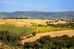 培养的领域和果树园,希腊 库存照片
