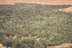 培养的领域和棕榈在拉希迪耶摩洛哥北非A 库存图片