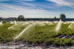 培养的领域的灌溉在北部的乡下 免版税库存图片