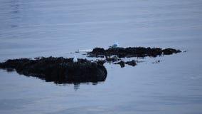 基于一个小海海岛的海鸥 影视素材
