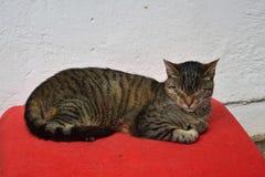 基于一条红色毯子的虎斑猫 免版税库存照片