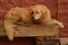 基于一条长凳的可爱的金黄狗在有黑石板屋顶的一个美丽如画的村庄在Madriguera 动物农村假日的旅行 库存图片