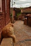基于一条长凳的可爱的金黄狗在有黑石板屋顶的一个美丽如画的村庄在Madriguera 动物农村假日的旅行 免版税库存图片