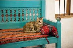 基于与阿拉伯织品的一条长凳的逗人喜爱的猫 免版税图库摄影