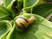 基于事假的小蜗牛 库存图片